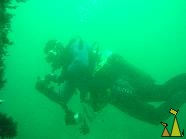 Diver, Narvik, Norway, underwater, green, diver