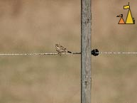 Pipit on a string, Angarn, Stockholm, Sweden, bird, Anthus pratensis, fence, Meadow pipit