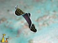 Welcome to LivingAt, Yellowspot flatworm